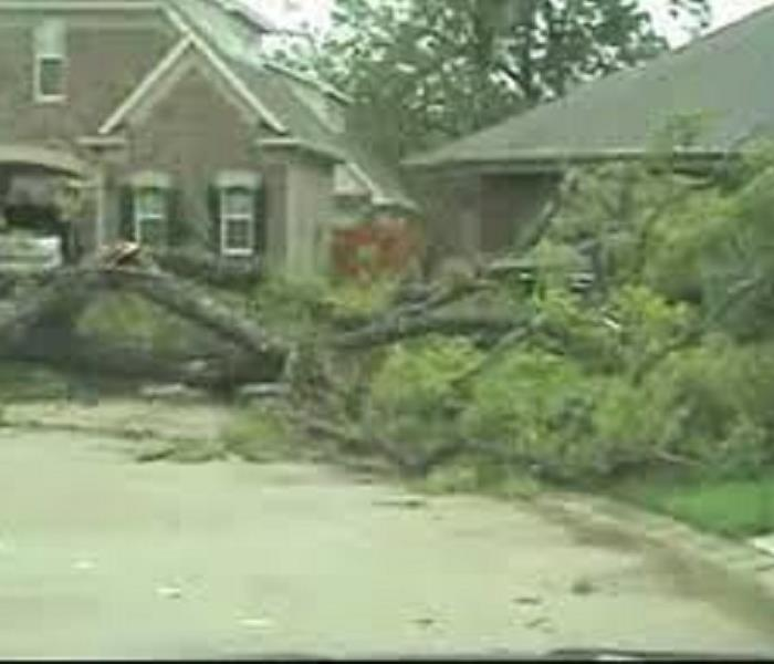 Fallen Tree from Houston Storm Damage