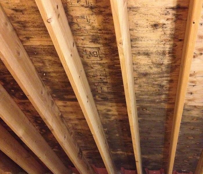 Houston Mold Damage in the Attic of Home