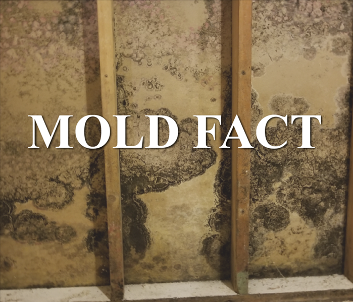 Drywall with black mold growth. Words MOLD FACT on picture